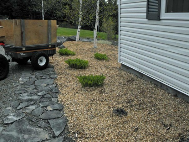 Landscaping with chipped wood mulch.