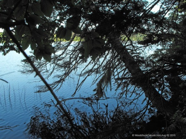 lake shoreline,quiet,in the woods,nature,forestry
