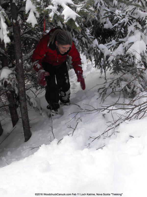 winter,forestry,Loch Katrine, Nova Scotia