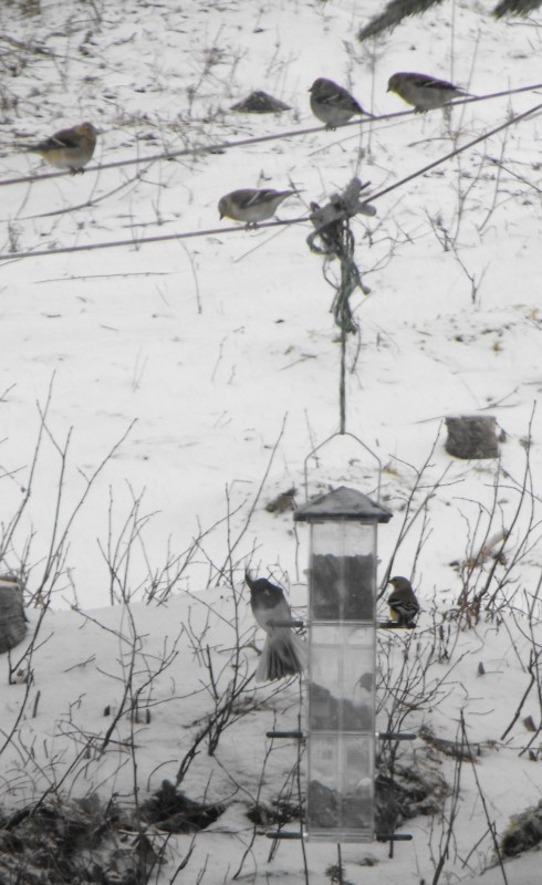 birds,wildlife