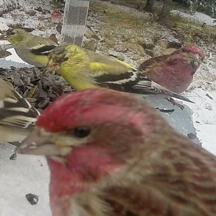 animals,birds,wildlife