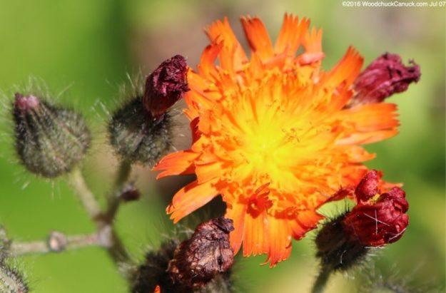 flowers,garden,landscaping