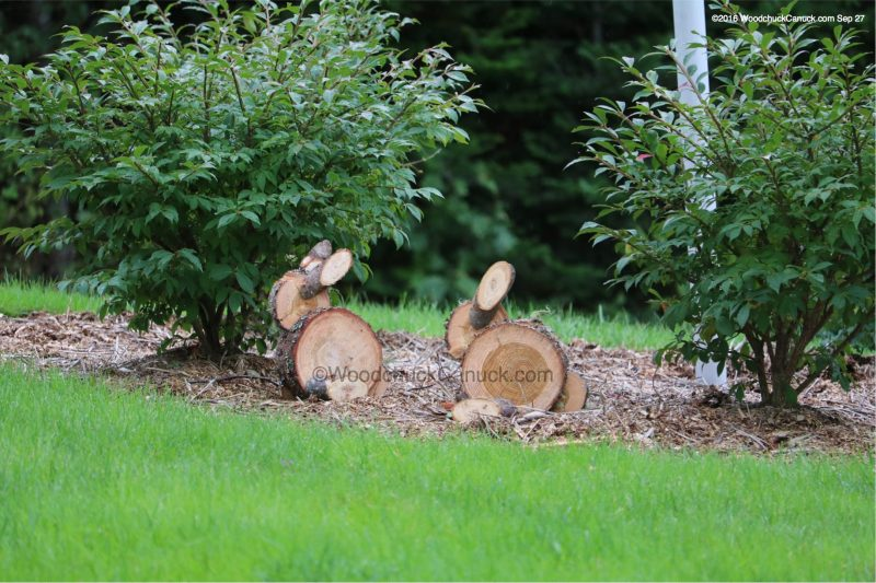 wood,rabbits,tamarack,larch,forestry,landscaping