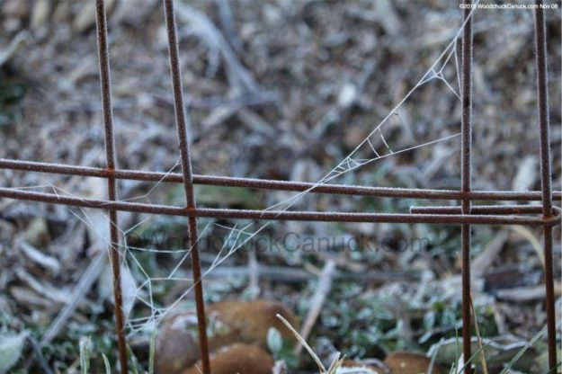 Frost on spider web