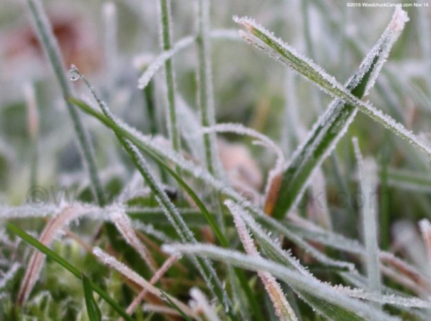 grass,frost,weather