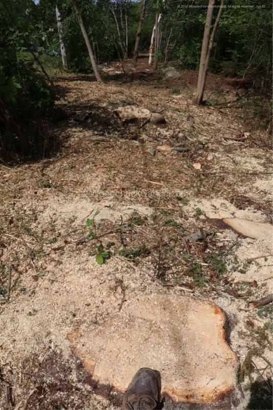 forestry,arborist,land management