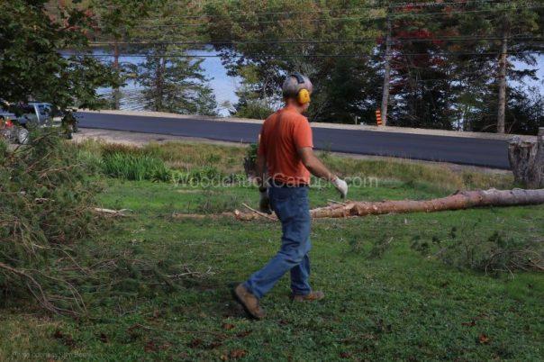 Jim,arborist,pine trees