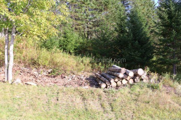 logs,sawmill