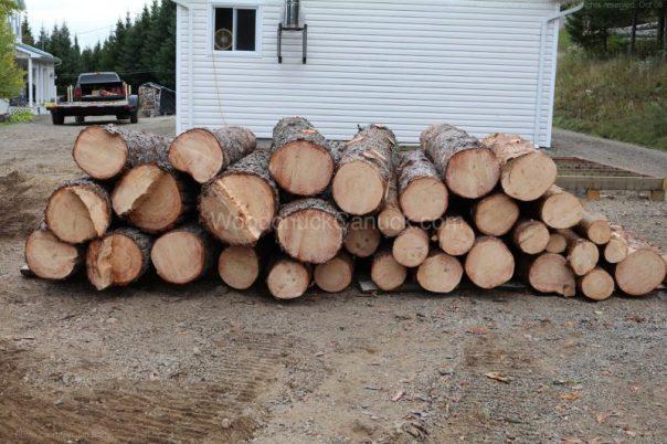 pine logs,log pile
