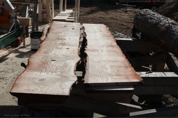 live edge boards,pine planks,saw milling