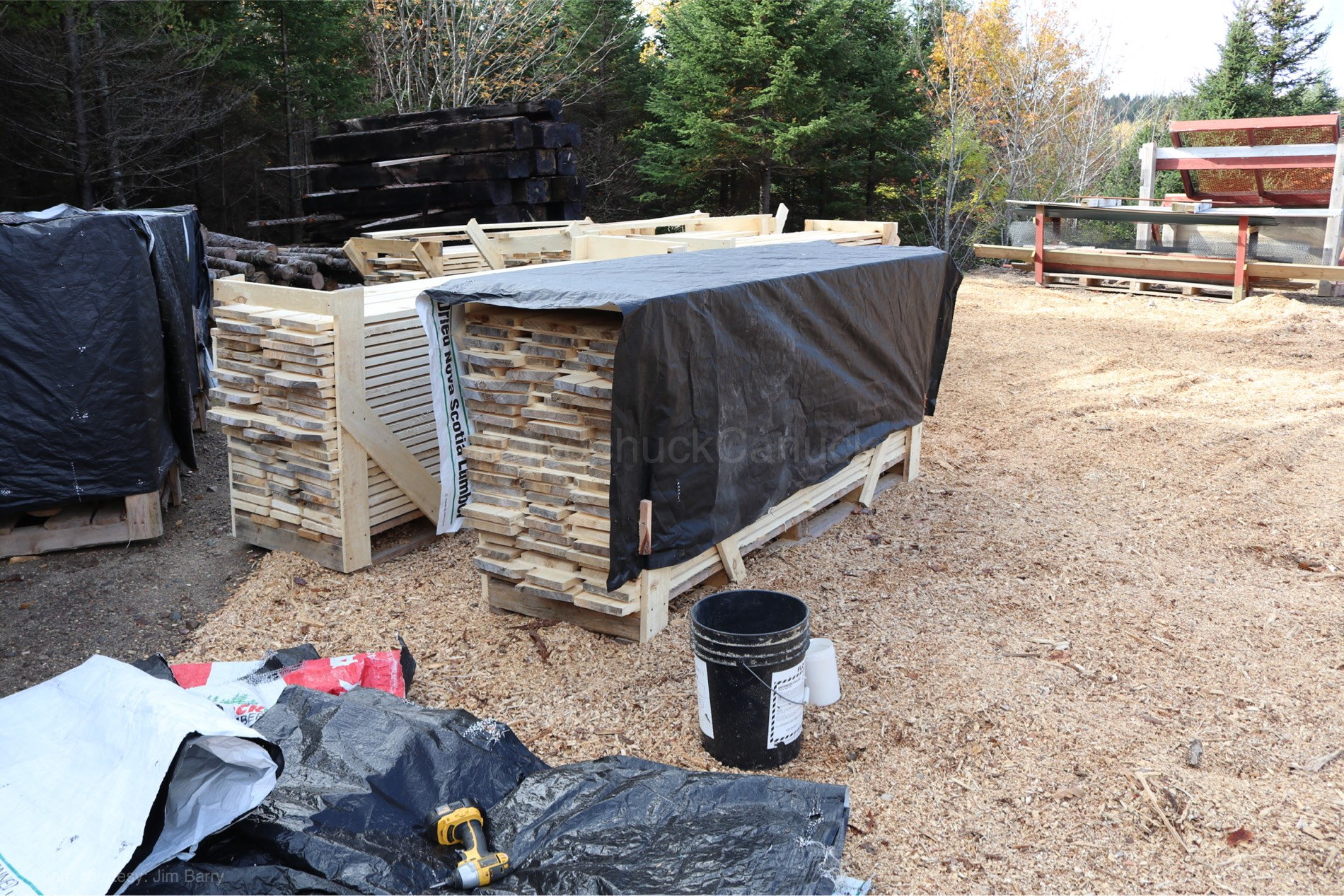 Stacks of poplar planks
