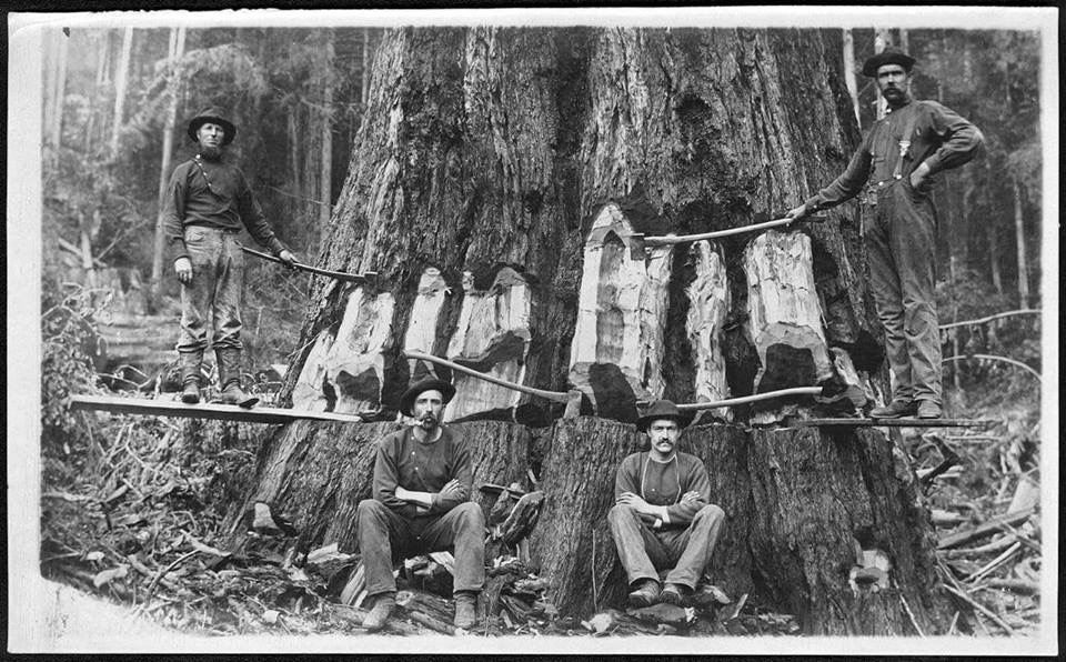 vintage logging photos,woodsmen,loggers