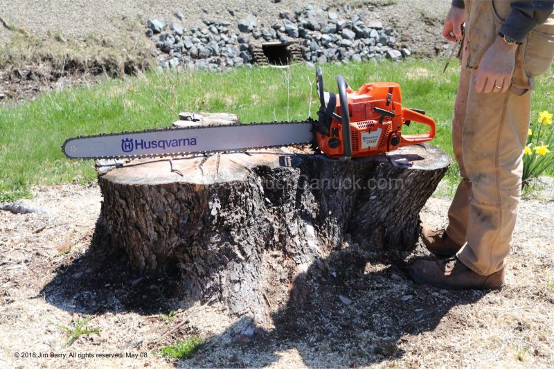 chainsaw,tree stumps