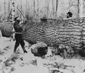 old logging photos,woodsmen,old photographs,forestry,loggers,big logs