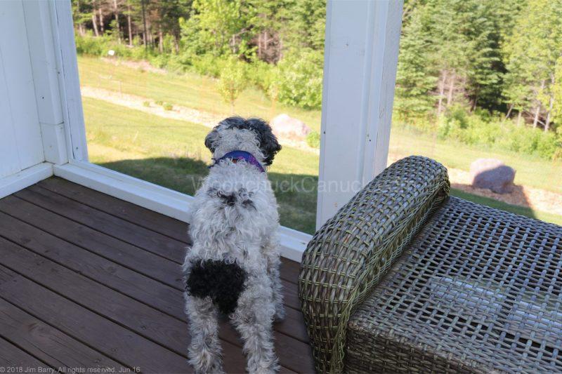 dog sitting,jacob,frank