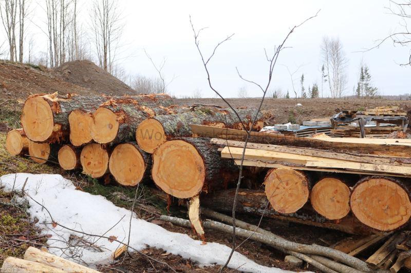 saw milling logs,pine logs,Nova Scotia, Antigonish county