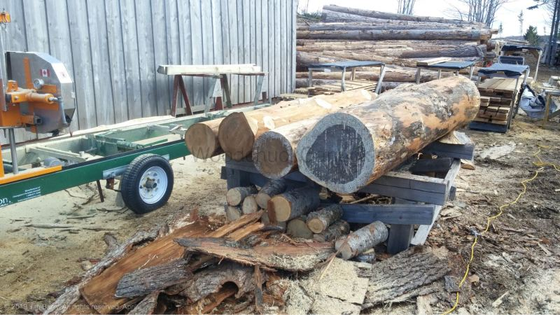 hemlock, sawmilling, big pine logs, Antigonish County, Guysborough County, Pictou County, Nova Scotia