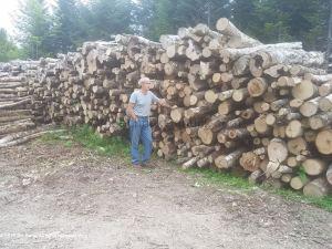 20190819 Firewood pile of logs