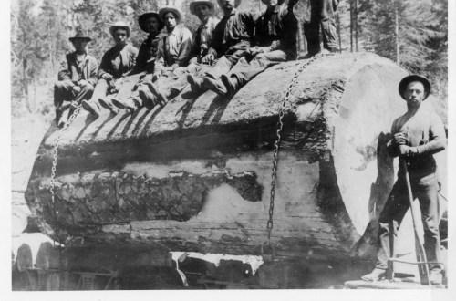 1900 Log on the narrow gauge railroad.
