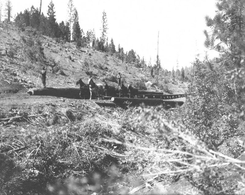 1900 Logging