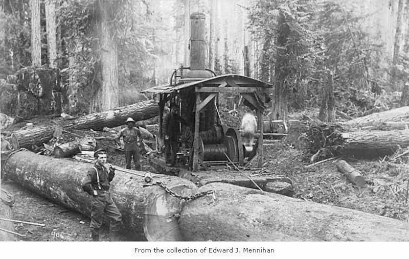 1902 Hall and Bishop Logging Company.