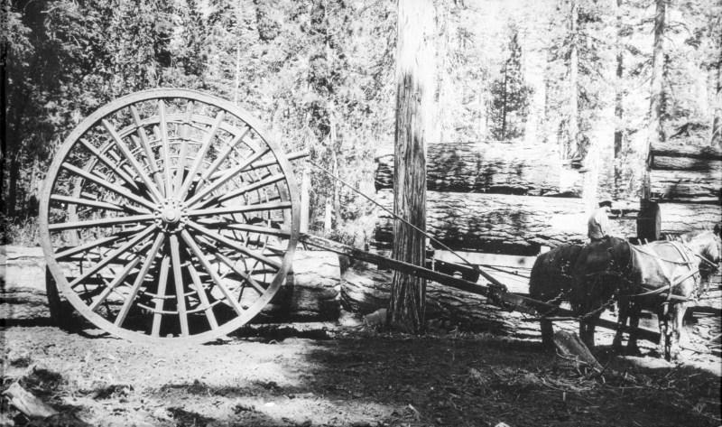 1919 Logging with Big Wheels.