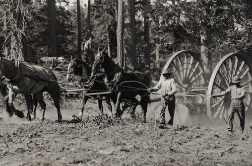 Charles W. Blakesley with team hauling logs.