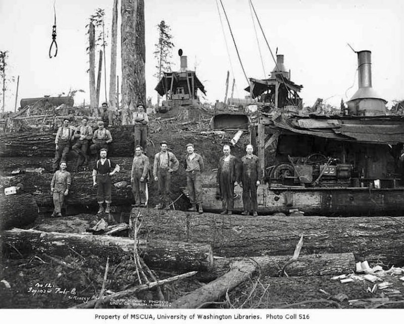 Crew at loading site with three donkey engines, Saginaw Timber Company, possibly in Grays Harbor County
