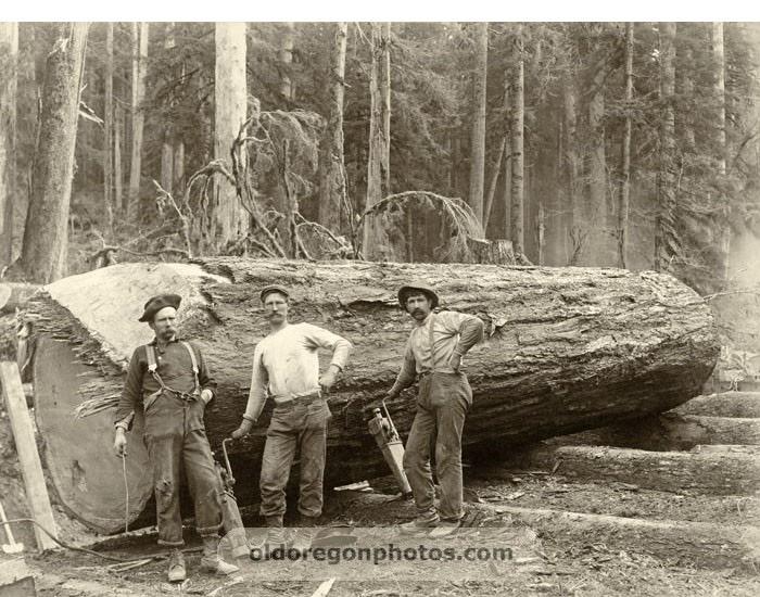 1898 Jack Screw Men Yarding a Large Log