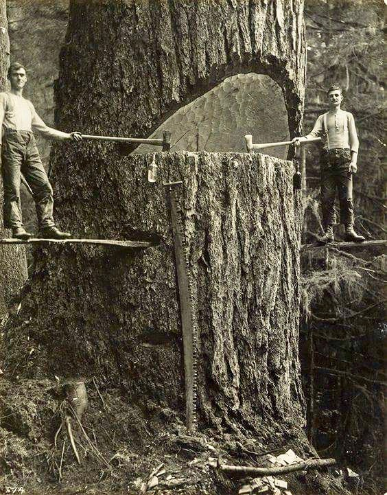 Two woodsmen stop for a photo while making a hinge cut.