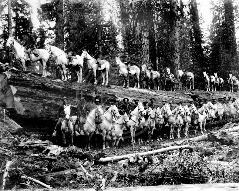 1898 4th Cavalry Division at Calavaras County, Sierra Nevada mountains.
