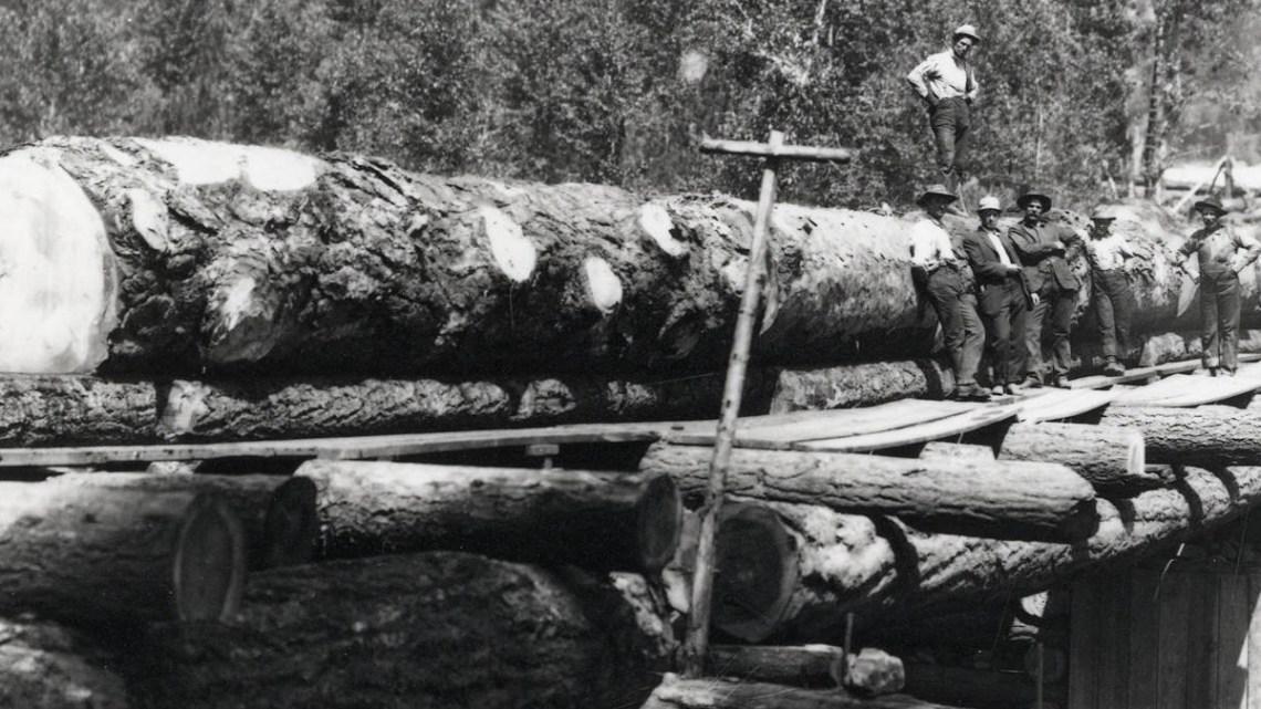 1900 Chute Logging