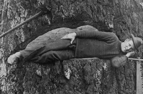 1910 Tree felling using spring boards.