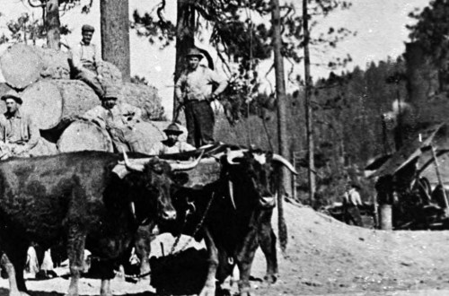 1910 Logging near Clio, CA, US