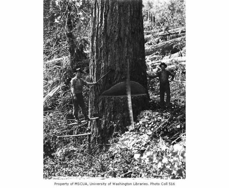 1920 Coats-Fordney Lumber Company