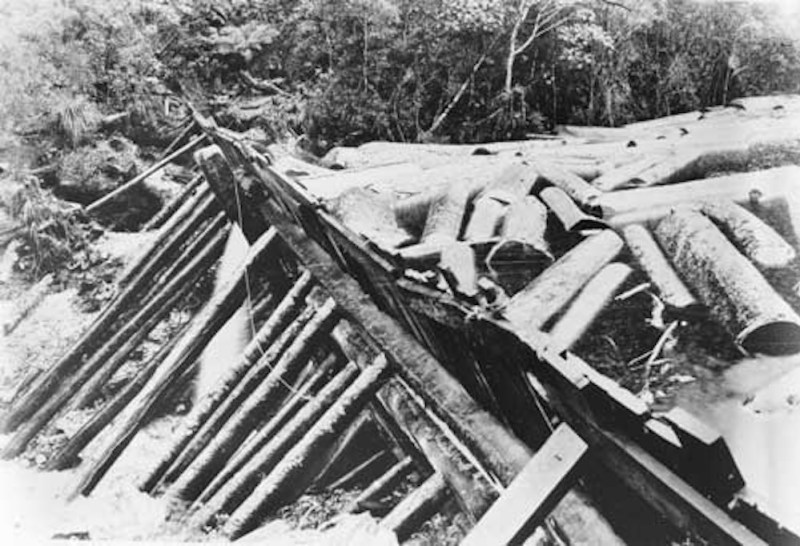 1921 Kauri dam ready to be tripped