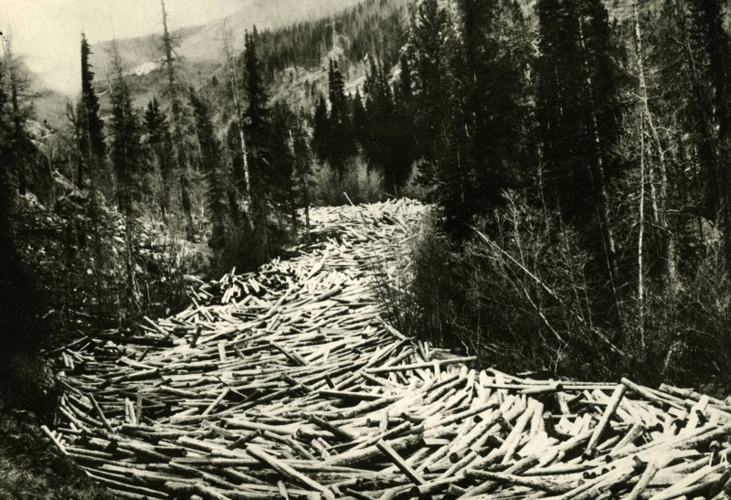 Logs awaiting spring flood to carry them to Columbia River.