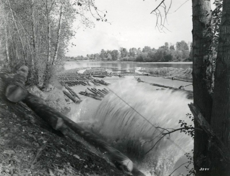 Logs plunge downhill into the water, Pope & Talbot, Dallas, Oregon.
