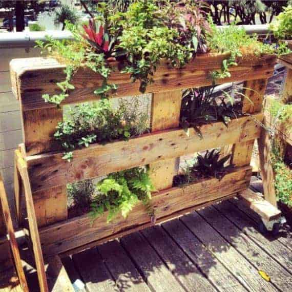 Pallet Garden Projects