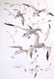 Gannets flying over Bass Rock