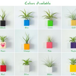 Set of 3 Colored Air Plant Magnets