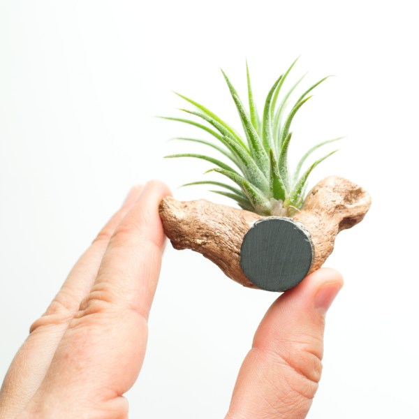 Air Plant Driftwood Magnet