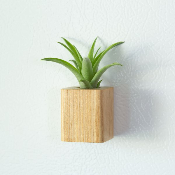 Light Wood Air Plant Magnet