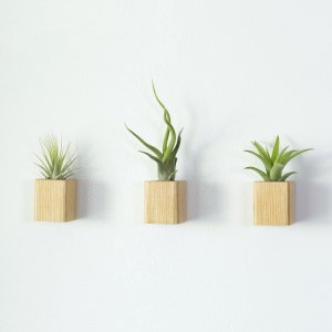 Set of 3 Light Wood Air Plant Magnets