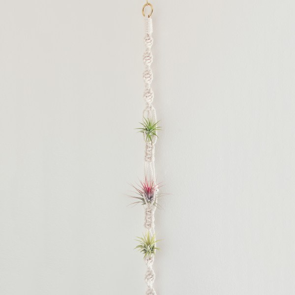 Macramé Air Plant Wall Display