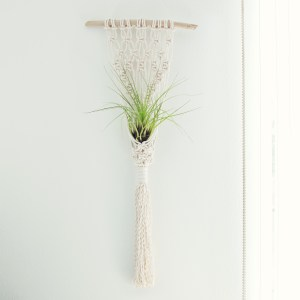 Macramé Air Plant Wall Hanger