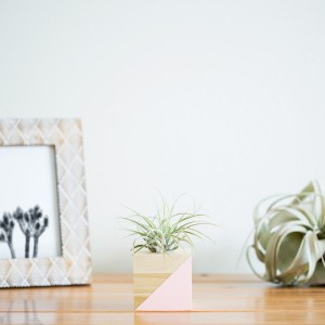 Diagonal Air Plant Holder