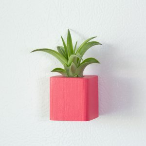 Pink Air Plant Magnet