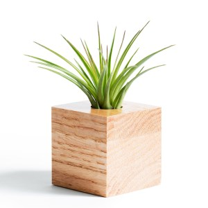 Red Oak Air Plant Holder
