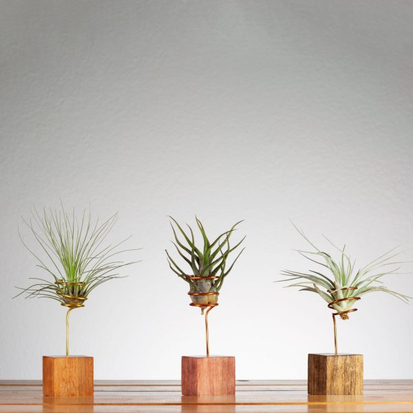 Set of 3 Tiny Air Plant Holders
